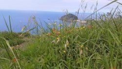 Meerblick von grüner Wiese auf Ischia